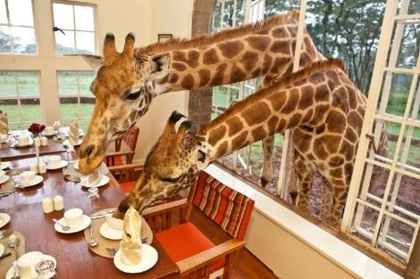 giraffe-manor-dining-5