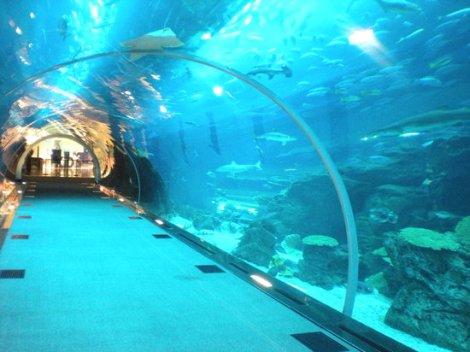 dubai-aquarium-underwater